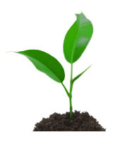plant-large1