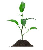 plant31